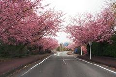 Japão Sakura Imagens de Stock Royalty Free