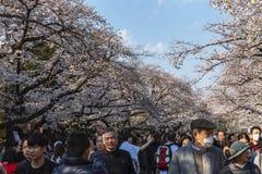 Japón, Tokio 04/04/2017 Festival de Hanami en Tokio, muchedumbres de gente en el parque con las flores de cerezo imagen de archivo