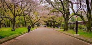 japan Fotografia Stock Libera da Diritti