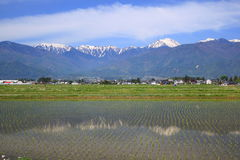 Japan Alps and paddy field Royalty Free Stock Photography