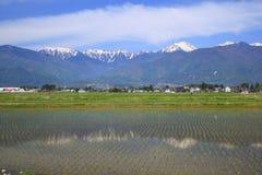 Japan Alps and paddy field. The Japan Alps and paddy field in Azumino city, Nagano, Japan royalty free stock photography