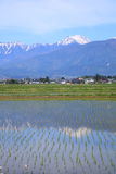 Japan Alps and paddy field Royalty Free Stock Photos