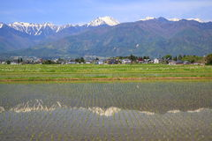 Japan Alps and paddy field. The Japan Alps and paddy field in Azumino city, Nagano, Japan stock photos