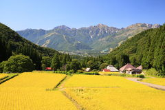 Japan Alps and rice field Stock Images