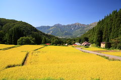 Japan Alps and rice field Royalty Free Stock Image