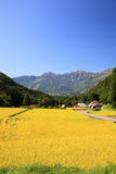 Japan Alps and rice field Stock Image