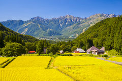 Japan Alps and rice field Royalty Free Stock Images