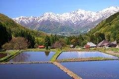 Japan Alps and terrace paddy field. Hakuba village Aoni, Nagano, Japan Royalty Free Stock Images