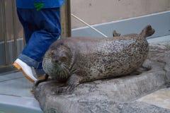 Japan aquarium show akita. Royalty Free Stock Photos