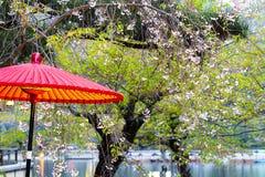 Japan. Arashiyama. ARASHIYAMA-APR 17: Unidentified people enjoy cherry blossom on April 17, 2011 at the park in Arashiyama, Japan. Arashiyama, western outskirt Royalty Free Stock Photography
