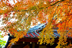 Japan Autumn Stock Images