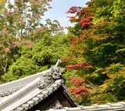 Japan autumn and roof Royalty Free Stock Image