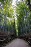 Japan bamboo. Japan tall bamboo in Kyoto Royalty Free Stock Photos