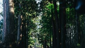 Chiba Road full of tree. stock images