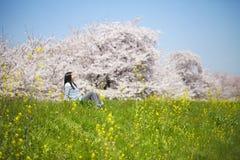 Japan Cherry Blossom arkivbild