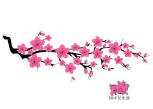 Japan cherry blossom branching tree  illustration. Japanese invitation card with asian blossoming plum branch.  Royalty Free Stock Images