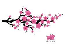 Japan cherry blossom branching tree illustration. Japanese invitation card with asian blossoming plum branch.  stock illustration