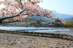 Japan. Cherry blossom and Oi River in Arashiyama, Kyoto, Japan. Japanese view Royalty Free Stock Photo
