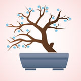 Japan or china bonsai small tree in pot Stock Photography