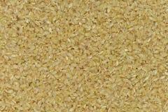 Japan Coarse rice background, Japan brown rice Royalty Free Stock Photo