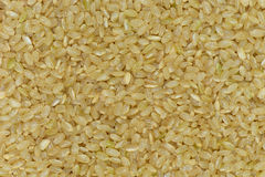 Japan Coarse rice background, Japan brown rice for healthy Stock Photography
