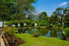 Japan eller japansk trädgårdstil med bonsaiträdet med grönt gräs och den lilla pölen eller sjön med den vita väggen på bakgrund - royaltyfria bilder