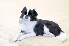 japan för 6 haka Royaltyfri Fotografi