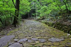 Japan forest path Royalty Free Stock Image