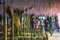 Japan-Frühling Lizenzfreies Stockfoto