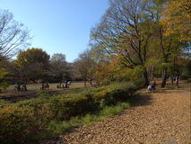 Japan Garden. Beautiful Japan Garden in tokyo Stock Photography