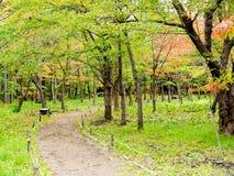 Japan garden Royalty Free Stock Photo