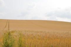 Japan Grassland. Furano grassland random Stock Photos