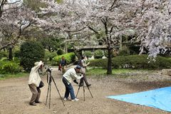 Japan - hanami Stock Photos