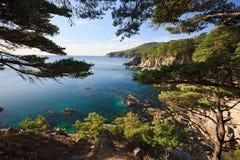 Japan hav. Hösttrees Arkivfoton