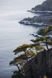 Japan hav i vinter 6 Arkivbild