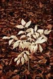 Japan hav. Skinande leaves Royaltyfri Foto