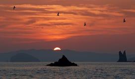 Japan hav. Solnedgång och sea-gulls Arkivbild