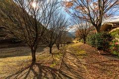 Japan-Herbst rotes Ahornblatt auf dem Boden lizenzfreie stockfotos