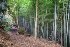 Japan hiking trail. Kamakura forest hike - Tenen trail between Zuisenji and Kenchoji temples stock photography