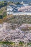 Japan Himeji castle with light up in sakura cherry Stock Image