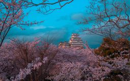 Himeji White castle and Cherry blossom stock images