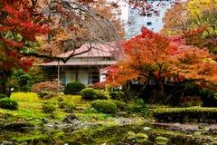 Japan historic house red maple and bonsai garden. Trees autumn's season red maple Japan royalty free stock photos