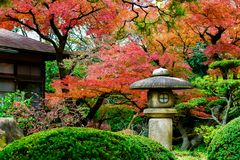 Japan house historic red maple and bonsai park. Trees autumn's season red maple Japan stock image