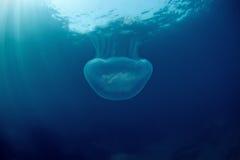 japan jellyfish księżyc morze pod wodą Obraz Royalty Free