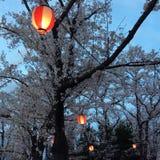 Japan körsbärsröda blomningar Arkivbild