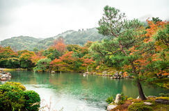 JAPAN,KOBE - 17 JAN 2017. Autumn Japanese garden,in the rain Stock Photos