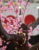 Japan-Kultursymbolflagge und Kirschbl?te lizenzfreie stockbilder