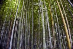 Japan Kyoto, Arashiyama, sikt av bambuskogen arkivbilder