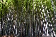 Japan Kyoto, Arashiyama, sikt av bambuskogen arkivfoto