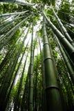 Japan Kyoto, Arashiyama, sikt av bambuskogen arkivfoton